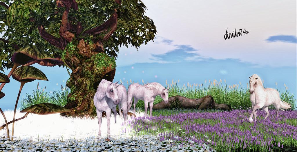 Unicorns Land