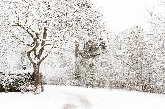A White Winter Rest