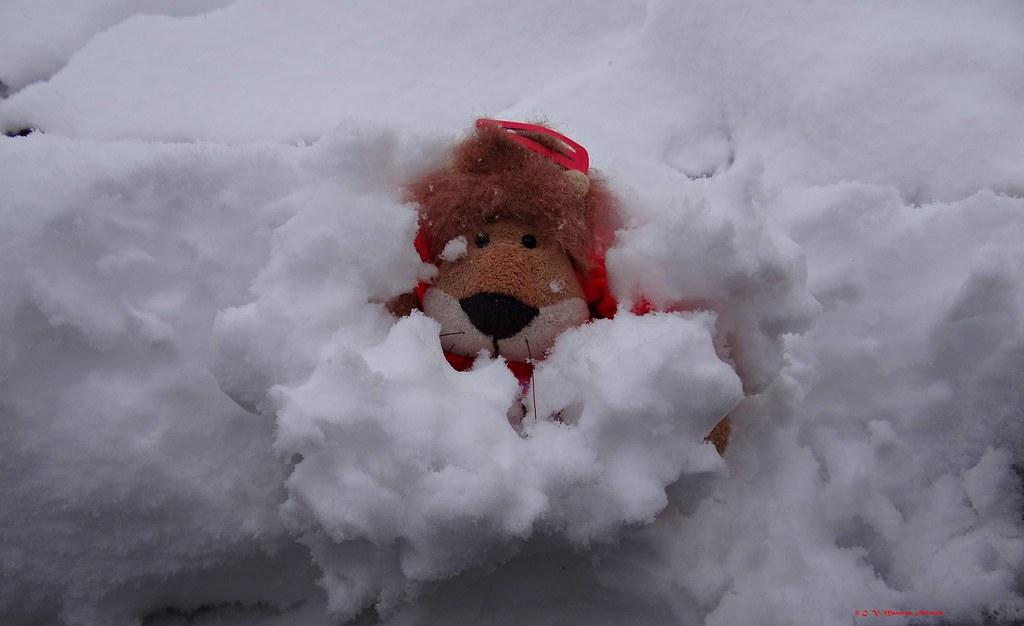 Leoncia atrapada en la nieve ❤