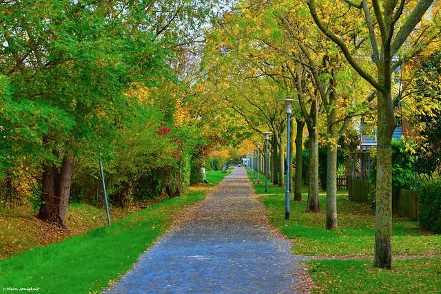 Auf dem Weg in den Herbst // On the way into autumn