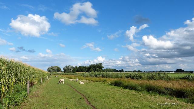 Summer memories.- Wandeling Snorrenhoefpad.