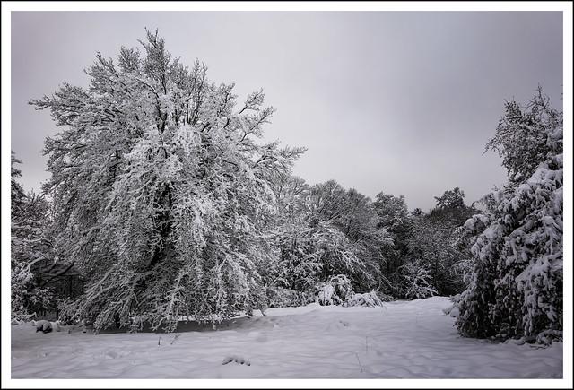 L1010292R_Leica_SL2-S_Lumix S 24-105_122020_Mengerskirchen Knoten_Winterlandschaft