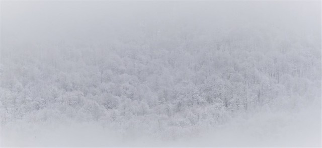 Through the fog.... (Explore 09.01.2021.)