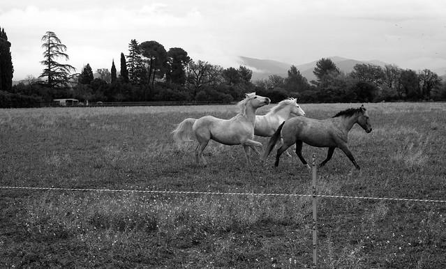 9734.Horses
