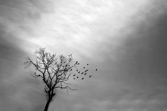 Trees without birds would be lonely...