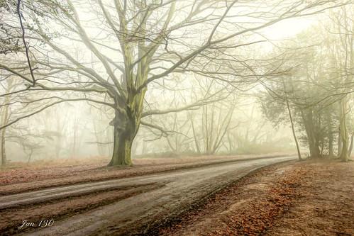 jan130 winter2021 january2021 beechtrees fog mist atmospheric peace walkswithmarnie suttoncoldfield suttonpark nationalnaturereserve topaz ngc npc