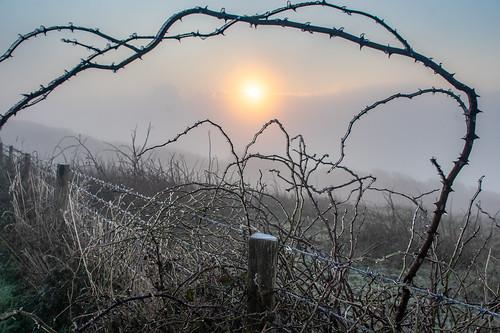 ice freezingfog brambles sunrise fence fenceposts barbedwire wire