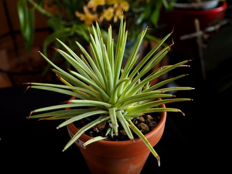 Les succulentes chez Cloo en 2021 50817798323_8a42b144d1_c
