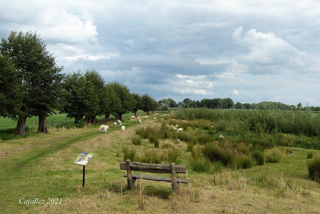 Summer memories.- Wandeling Snorrenhoefpad. (2)