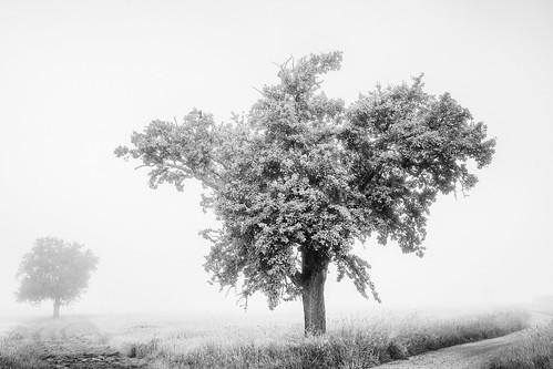 Tree Talks...