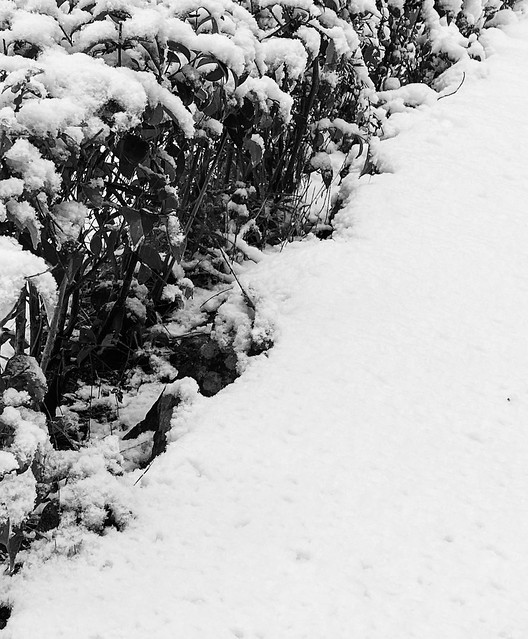 B&W snow perspective