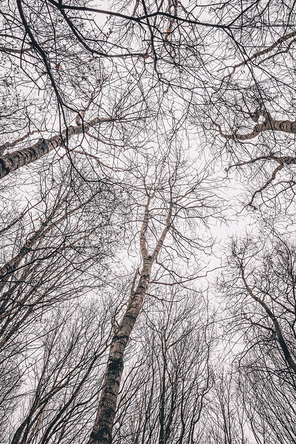 Neural Network Of Tree Branches