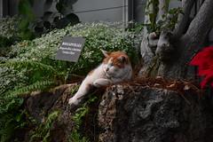 Longwood Gardens cat