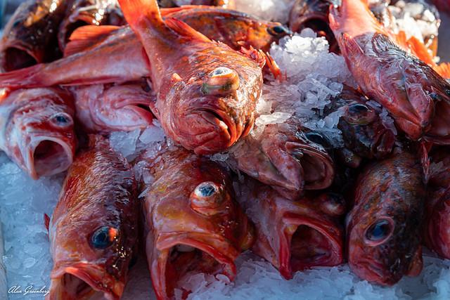 Rockfish or Pacific ocean perch