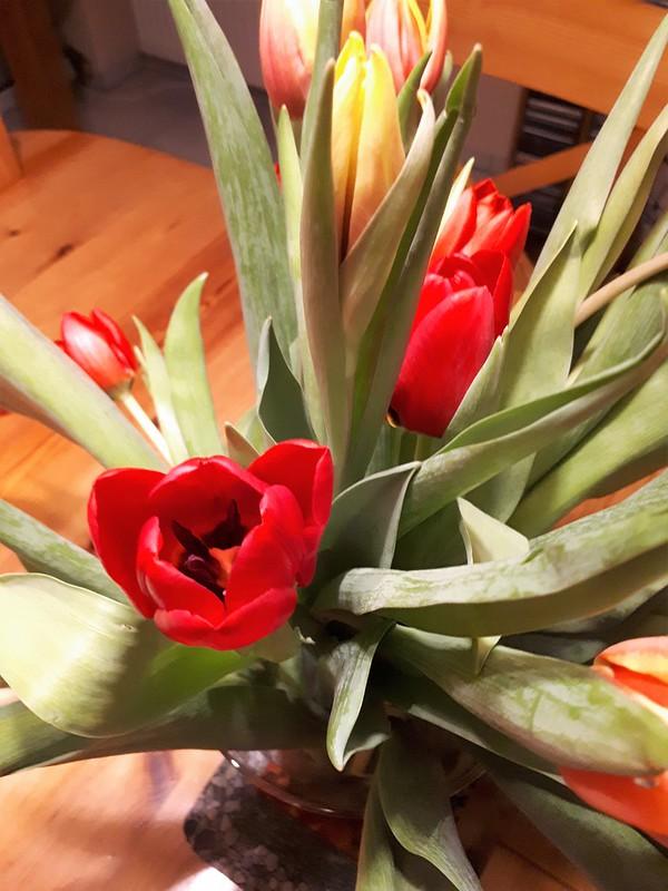 Die ersten Tulpen des Jahres
