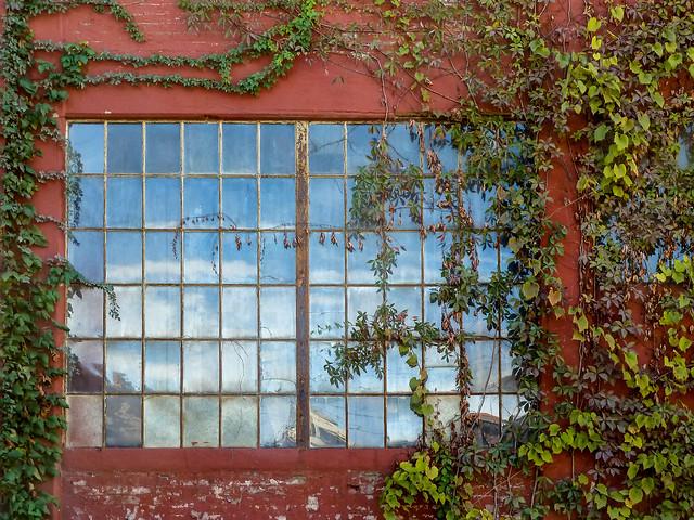 Overgrown Window