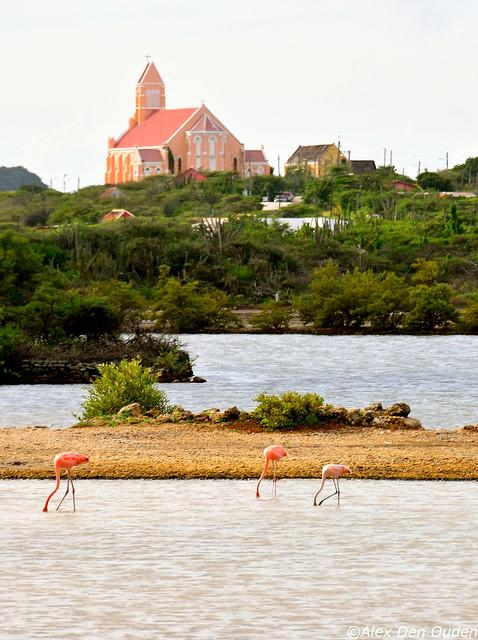Watching  Flamingoes instead of Netflix