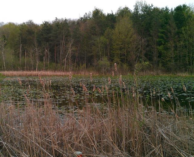 marsh layers