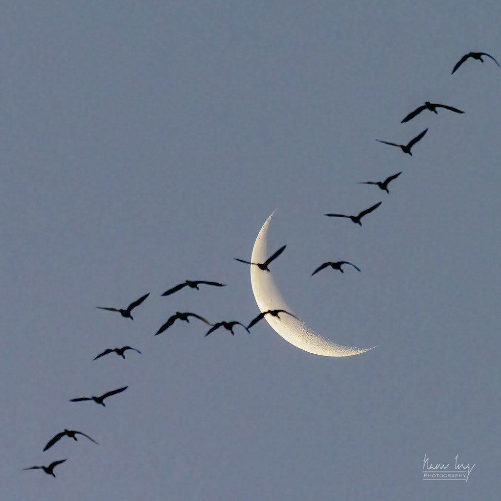 Quelques oiseaux 50819429317_a3a401705e_b