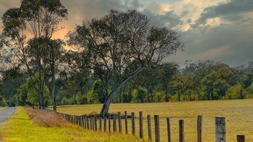 Along The Fenceline