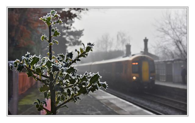 Holly-day fog.