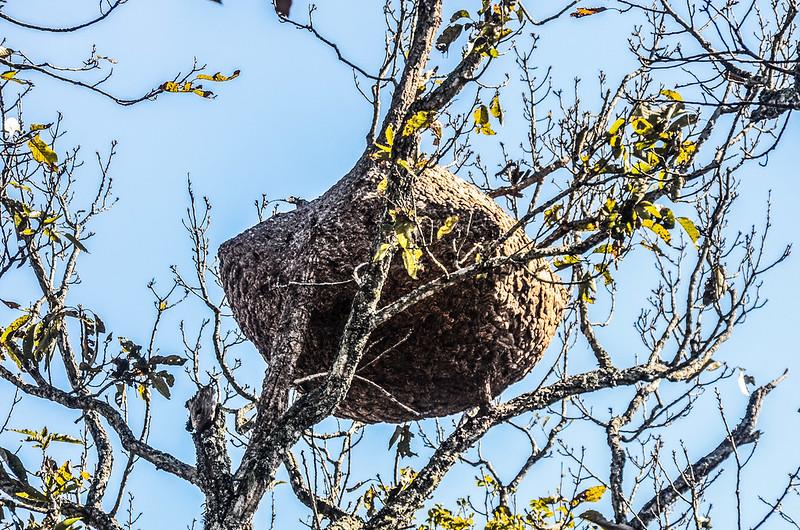 關門古道巨大蜂巢 (1)
