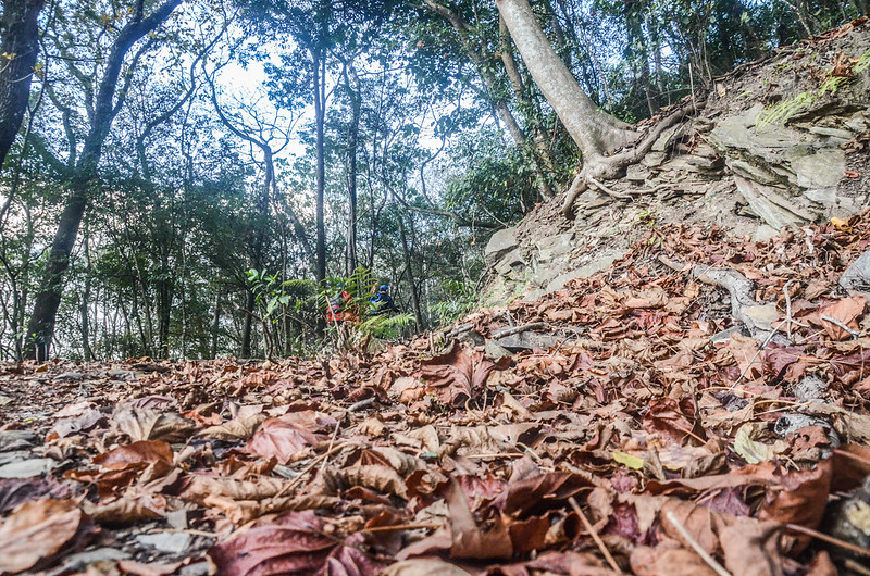 卡社山山坡林道山徑 (42)