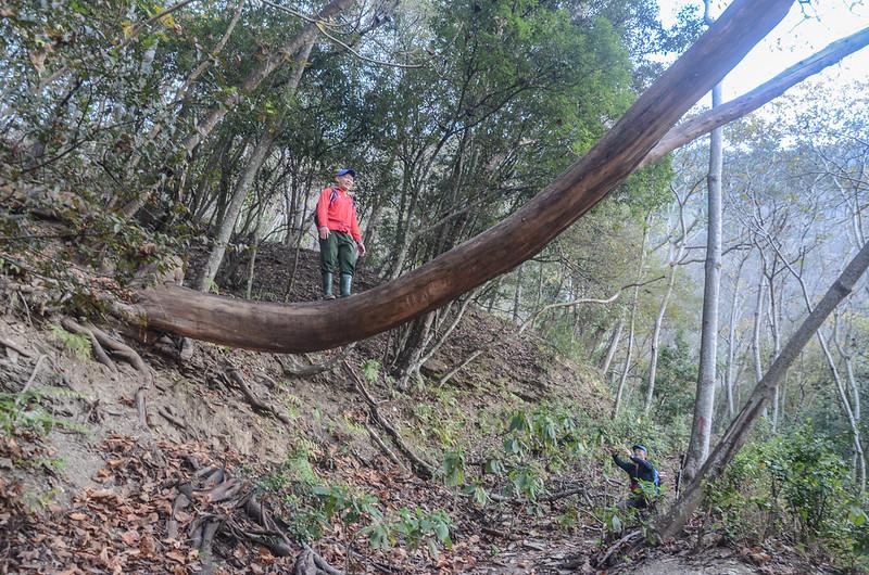 卡社山山坡林道山徑 (30)