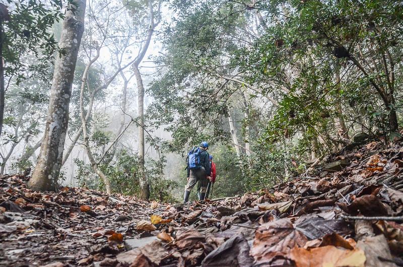 卡社山山坡林道山徑 (11)