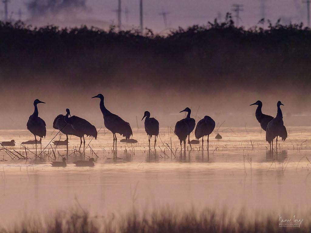 Quelques oiseaux 50819820106_138c1aebf5_b