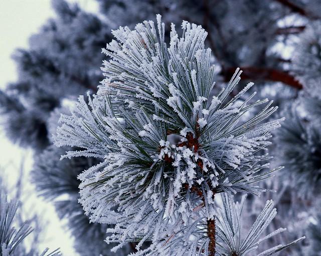Rime Ice - #3310 (Explored 1/10/2021)