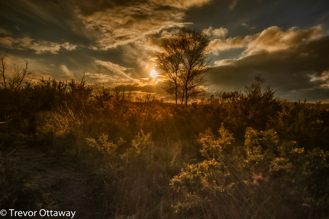 Last Rays of the Day (Chobham Common )