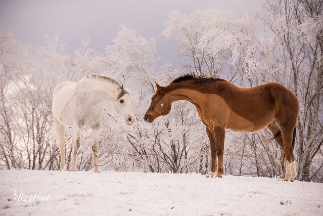 20210109 Horses in Snow and Rime_79