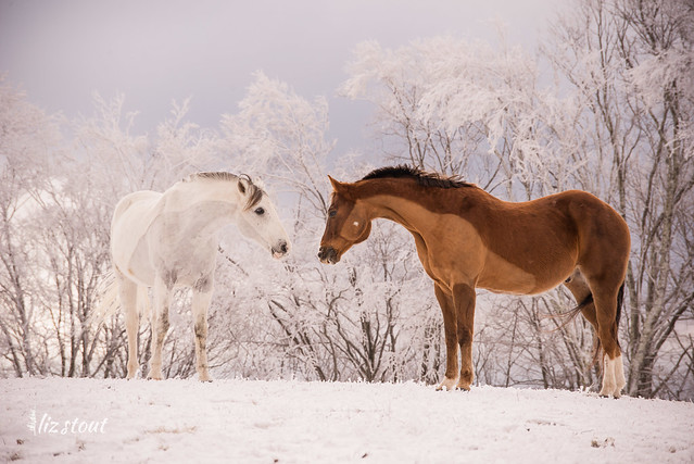 20210109 Horses in Snow and Rime_78
