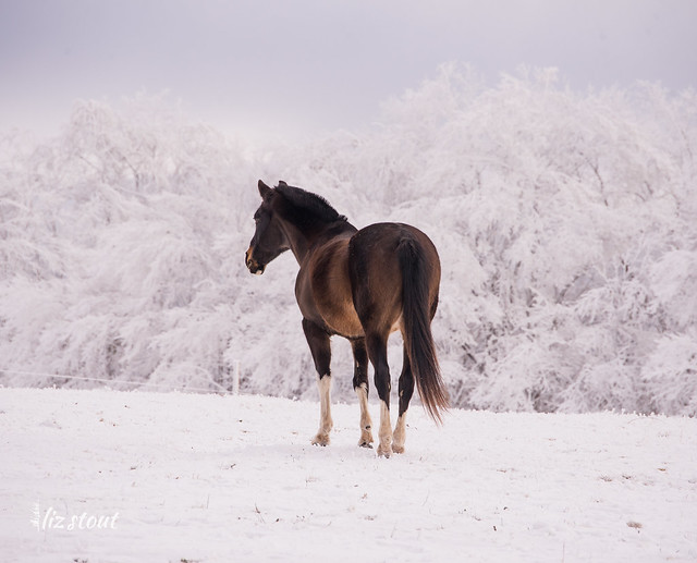 20210109 Horses in Snow and Rime_36