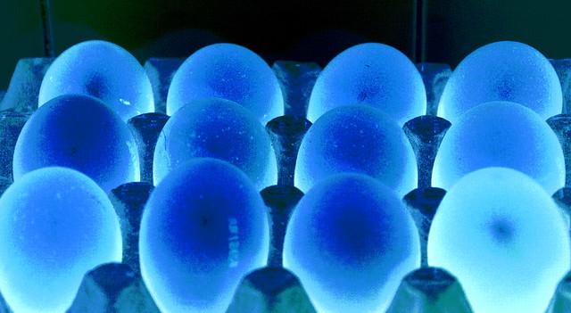 Alien Eggs?  IMG_5045III