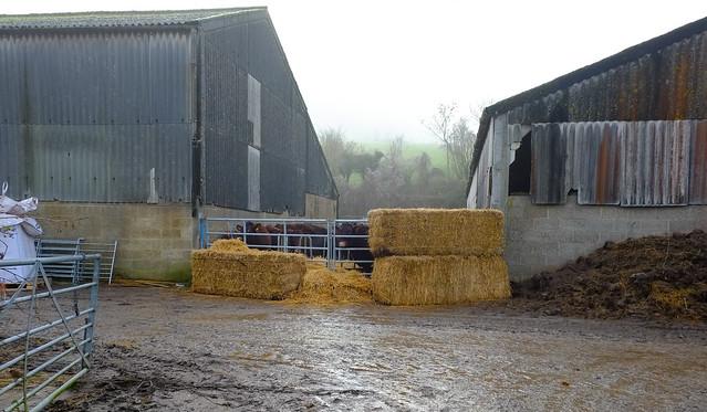 Rural Farm @ Shoreham