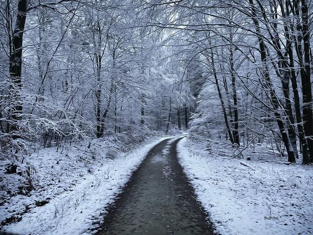 Taunus Winterwald
