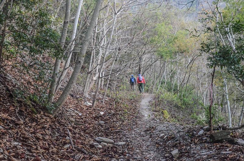 卡社山山坡林道山徑 (20)