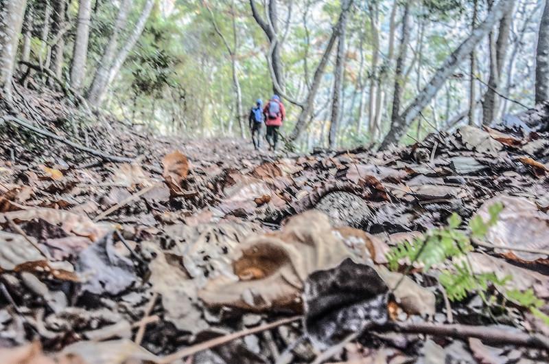 卡社山山坡林道山徑 (45)