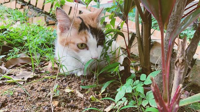 Neighbourhood cat ~