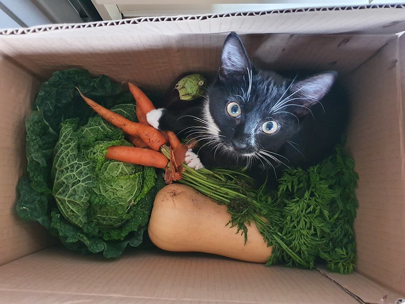 From last year, when Milo was a baby. Those veggie boxes always have something unexpected in them!