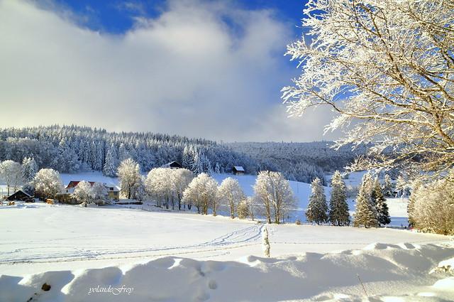 Féerie d'hiver ....