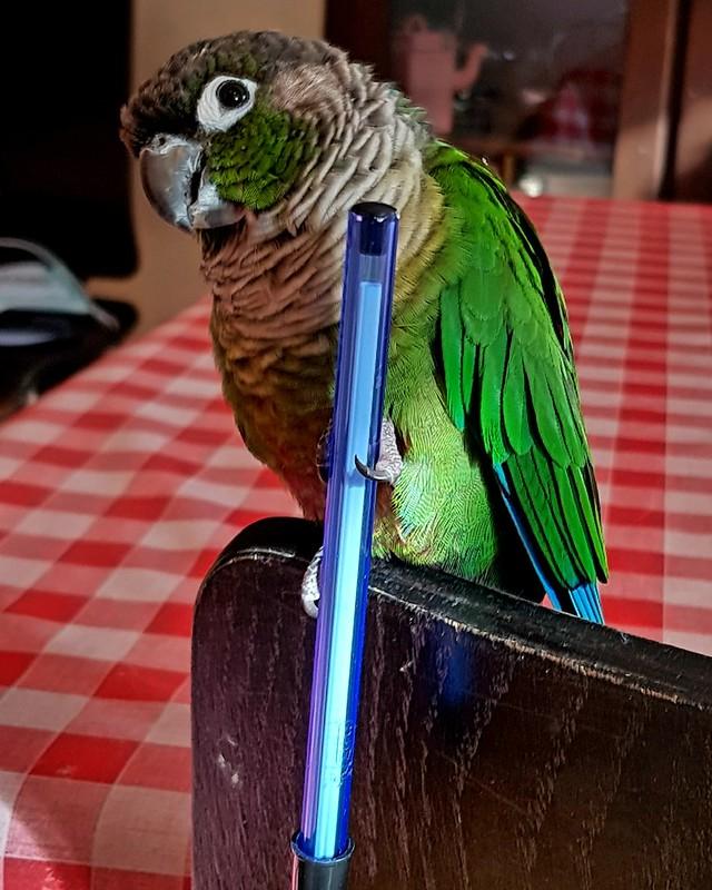 Garde des oiseaux pendant les vacances-Solutions 50820846383_58c00faf30_c