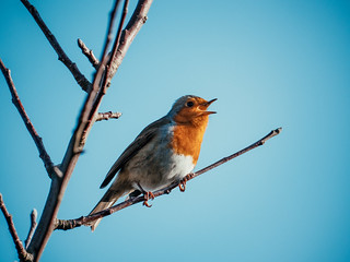 Robin at Alderman Moore's allotments | by Chris Bertram