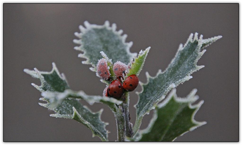 Art of nature in frozen beetles