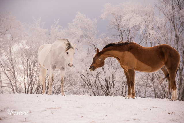 20210109 Horses in Snow and Rime_81