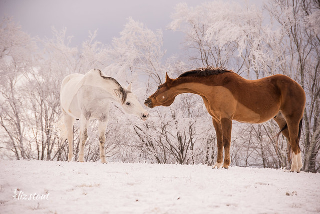 20210109 Horses in Snow and Rime_80