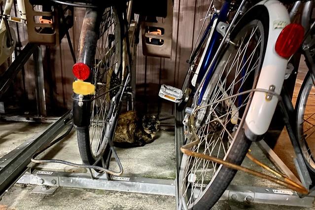 Today's Cat@2021−01−10