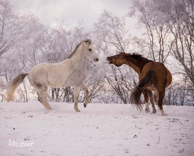 20210109 Horses in Snow and Rime_12